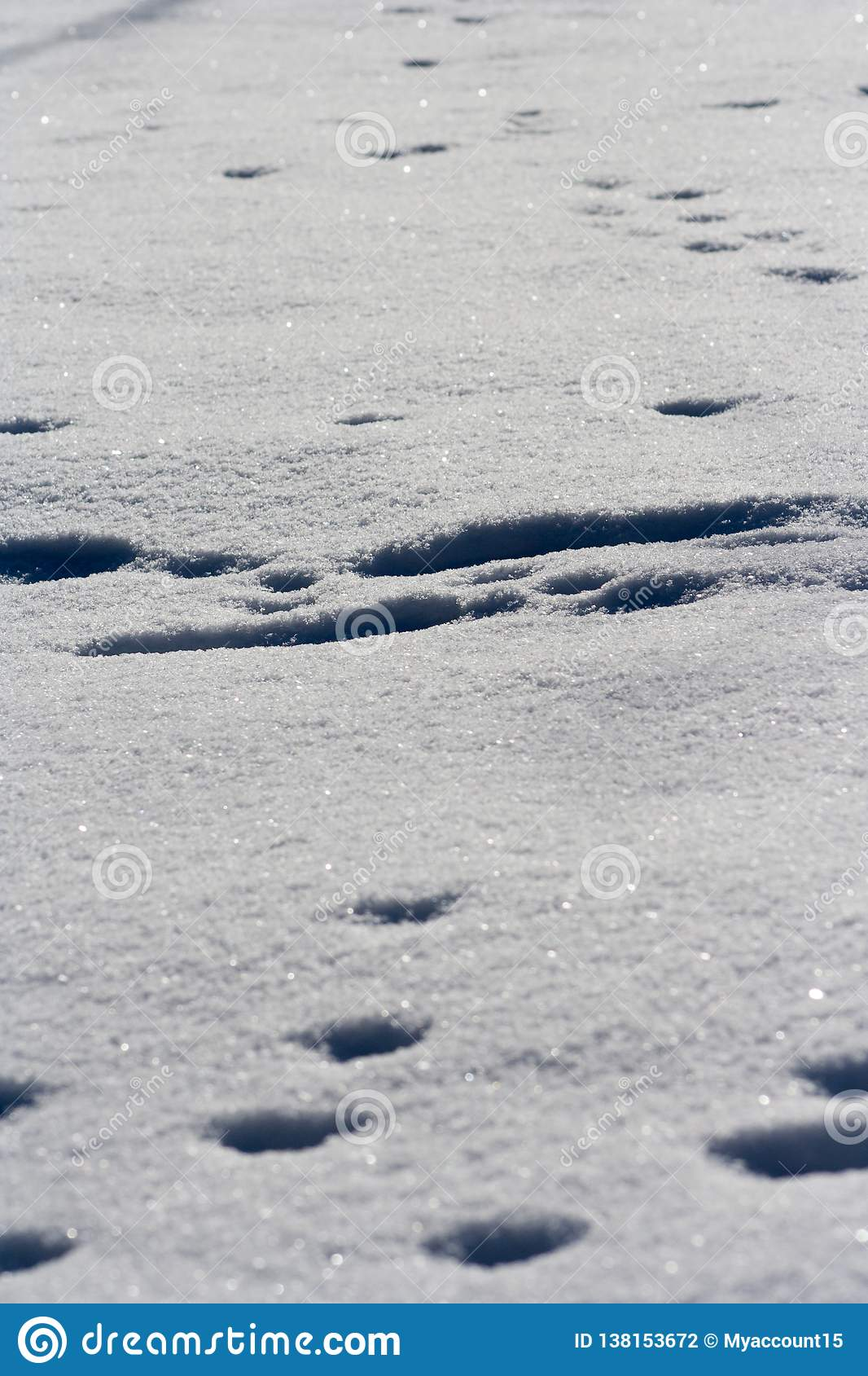 Traces of animals in snow