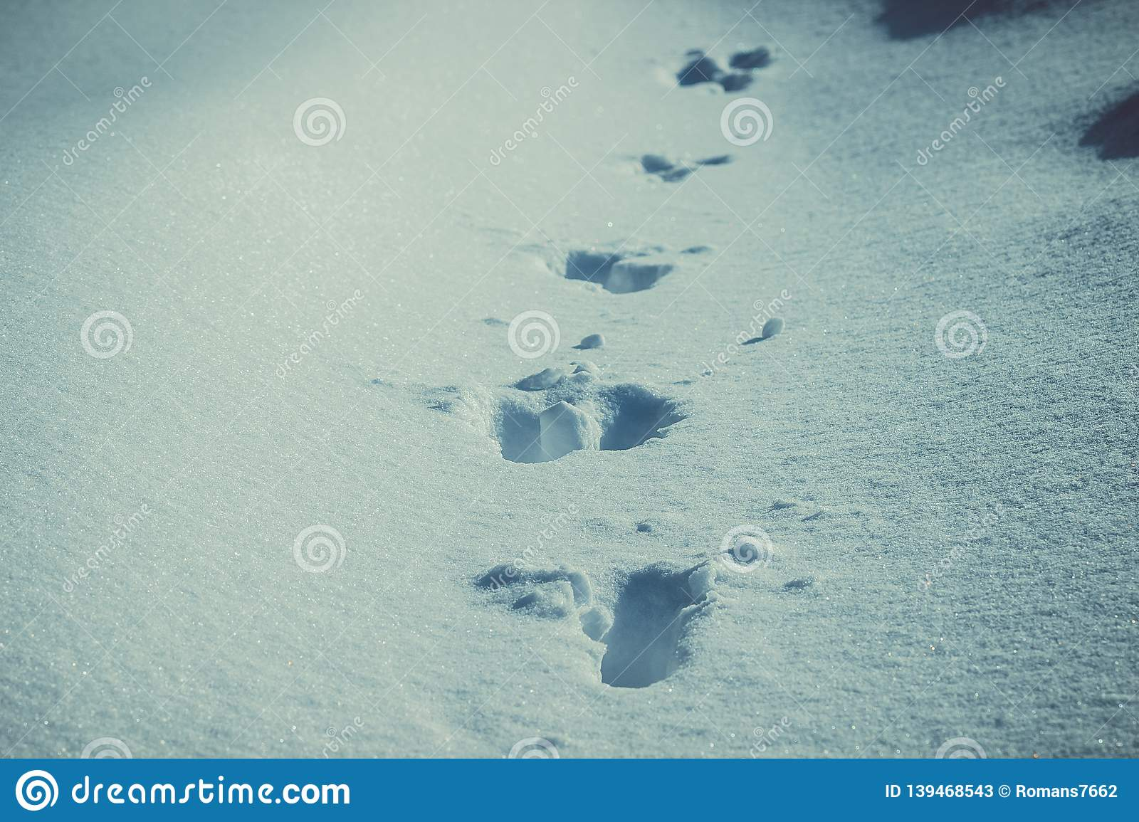 Traces of animals in the snow