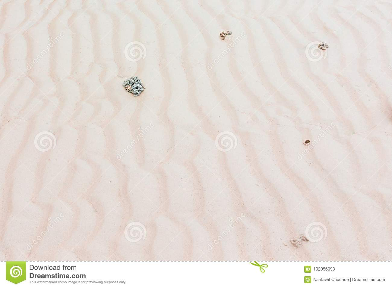 Traces The Beach Waves Have Stool Of Sea Worms Stock Image