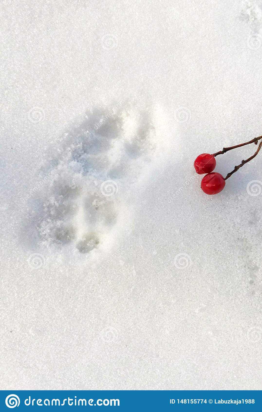 Traces of paws of a cat and berries of viburnum