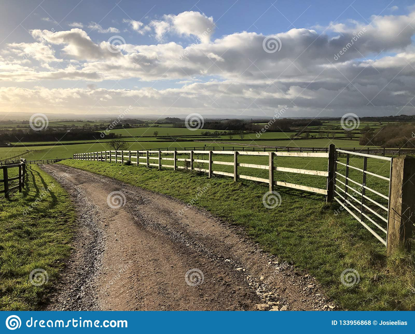 Track through bright green fields in a rural landscape, England