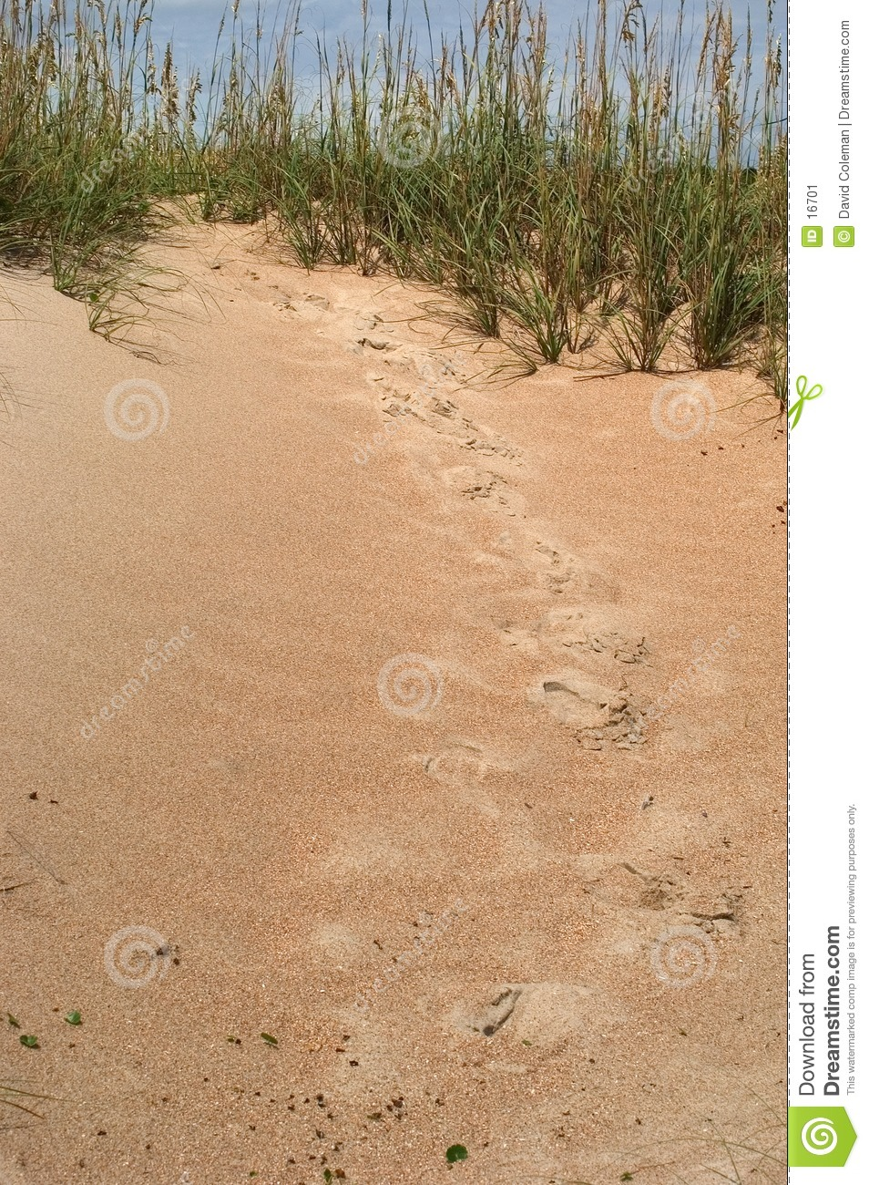Tracks in the Dunes
