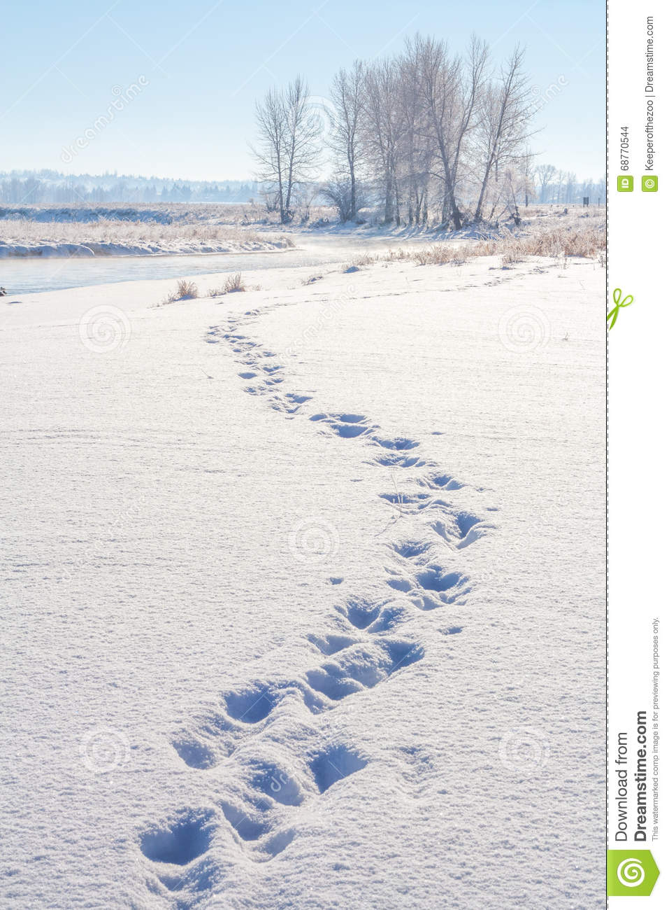 Download Tracks in the Snow stock photo. Image of nature, scenery - 68770544