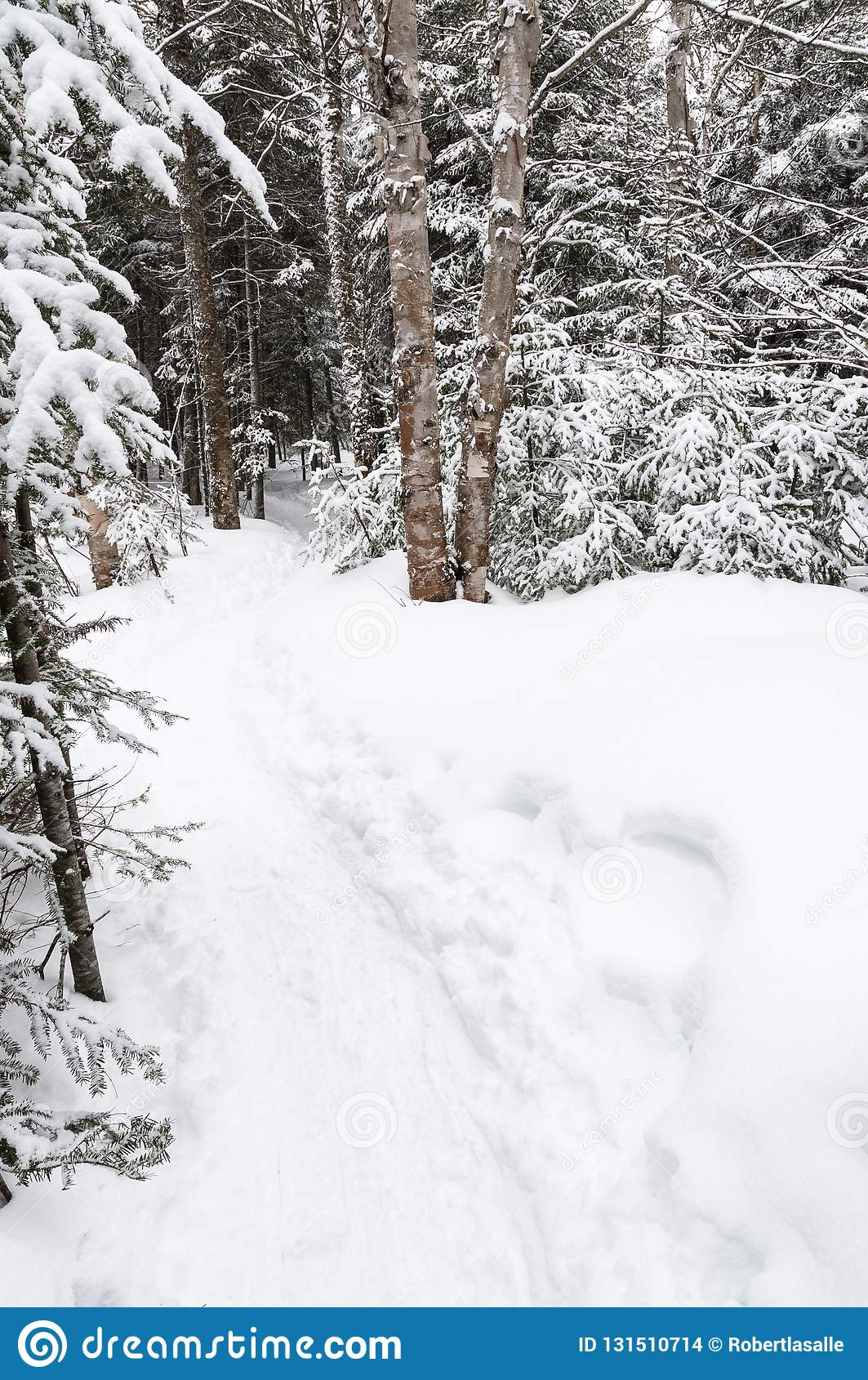 Tracks in snowshoeing trail in a national park in Canada