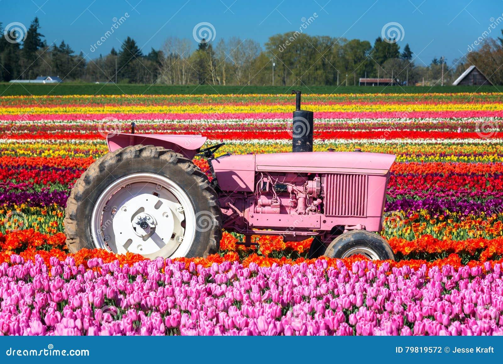Tracteur et tulipes roses