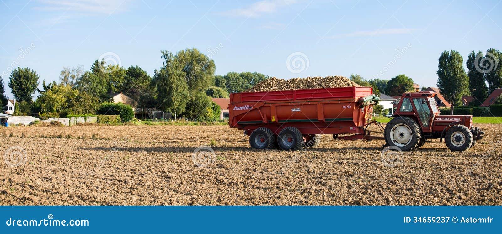 Tractor con una descarga llena de patatas