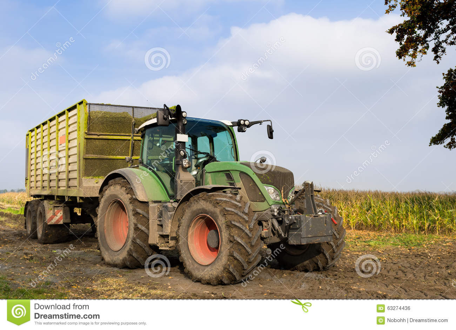 Cartoon Tractor Corn Picker : Combine harvester during canola harvest royalty free stock