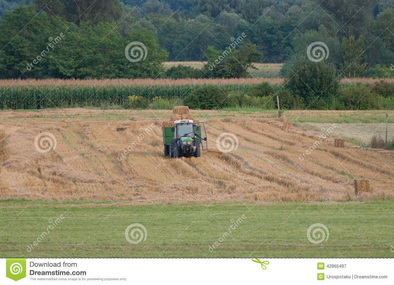 Tractor Trailer Stock : Tractor with trailer full of hay bales stock image