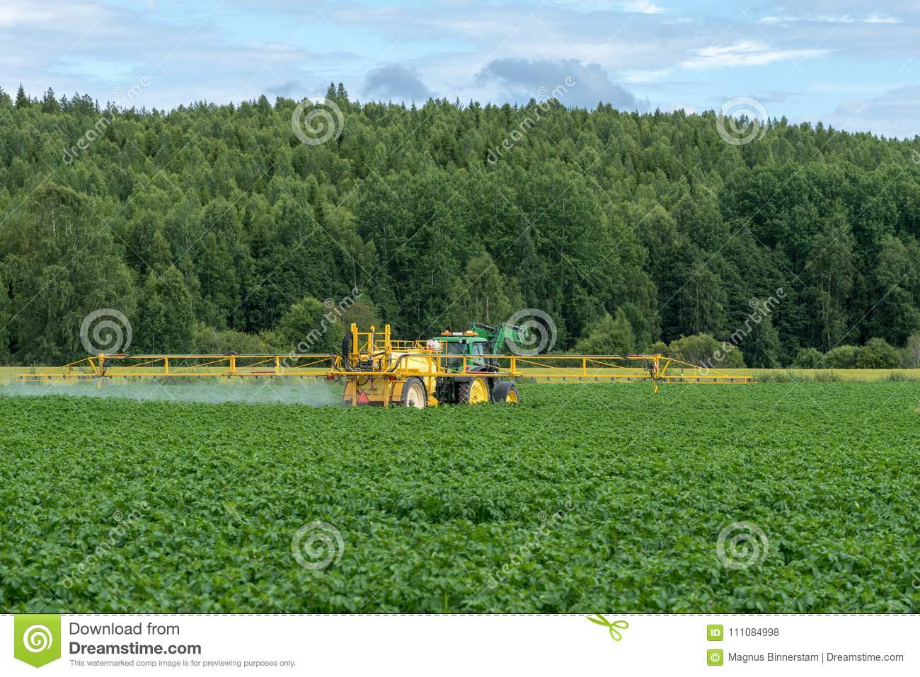 Yellow tractor watering a green potato field