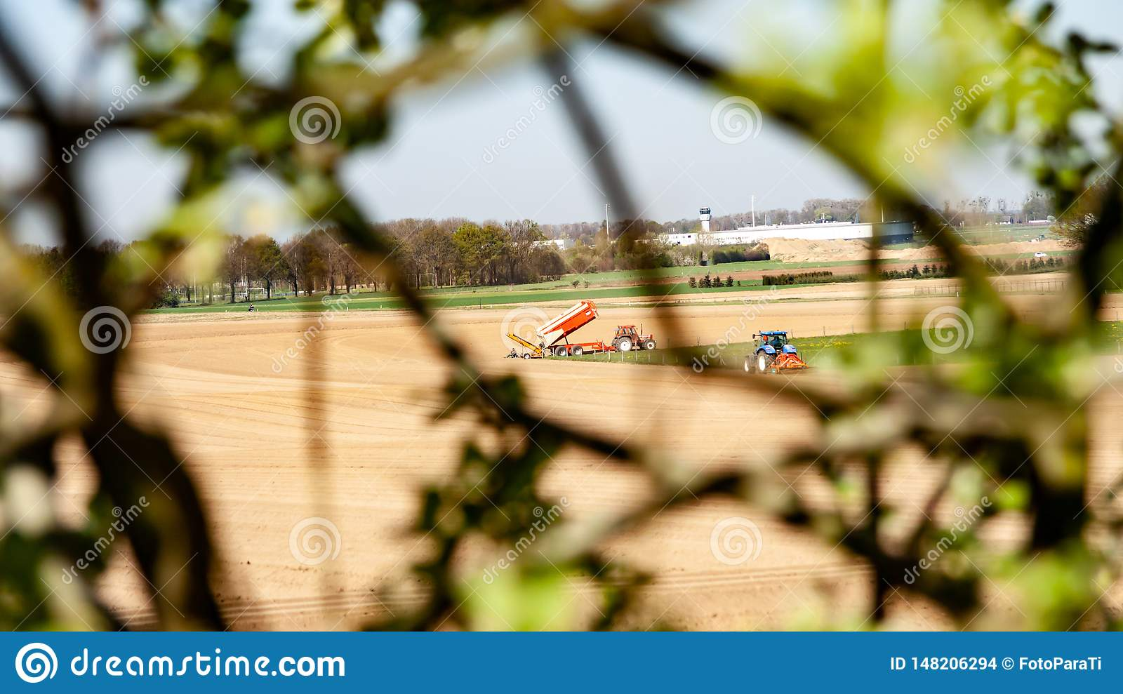 Tractors working on farmland to plant vegetables seen through the branches of a tree
