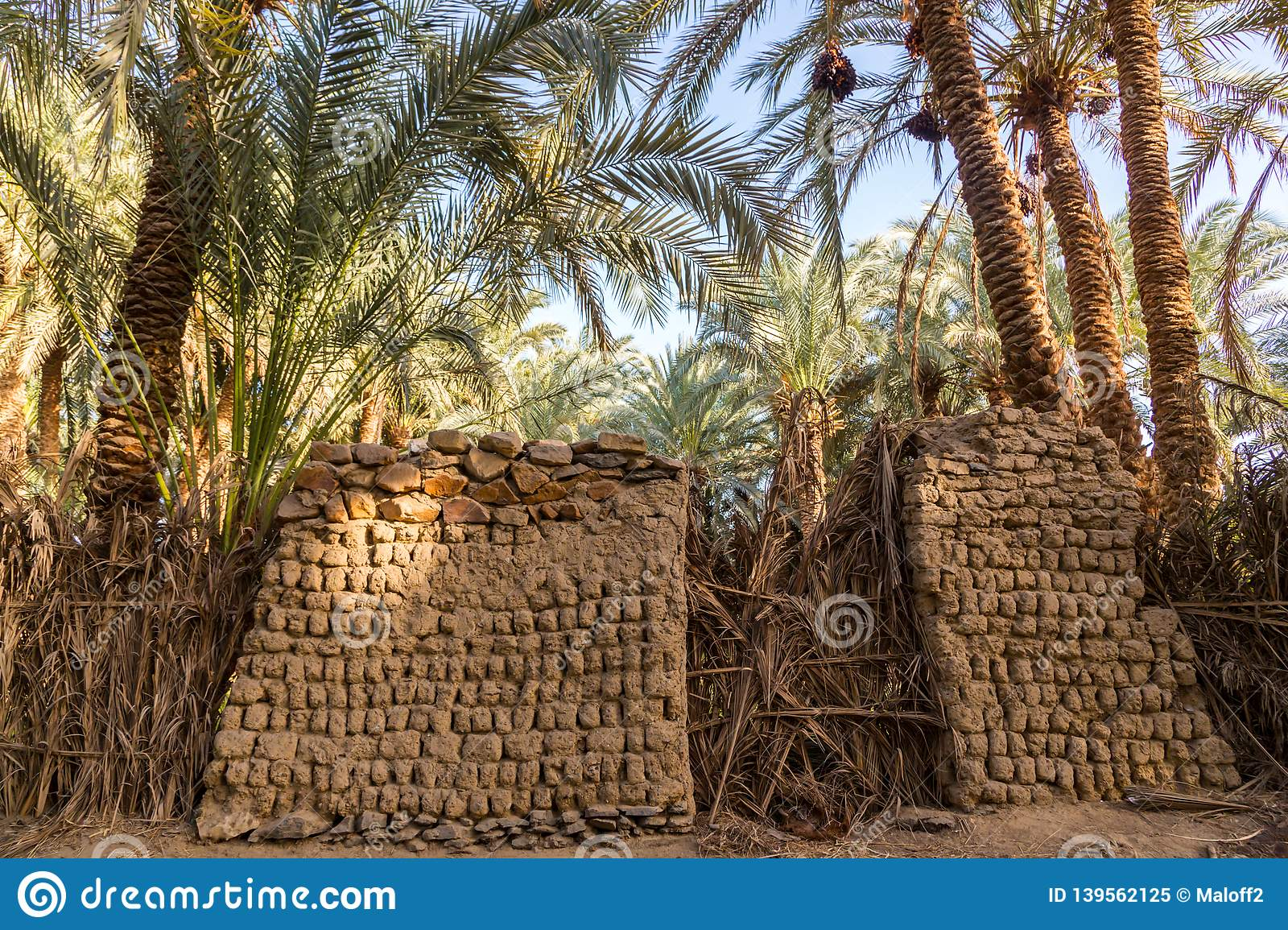 Traditional building of clay, thatched walls and adobe bricks, gardens of date palms. Bahariya, Western Desert, Sahara, Egypt.