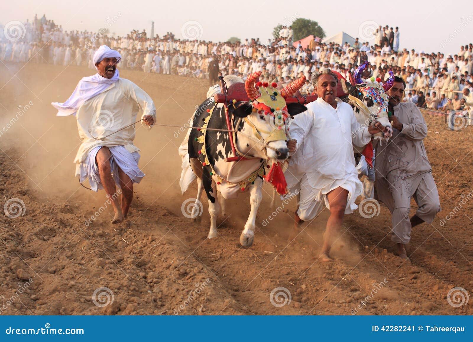 Traditional Bull Race