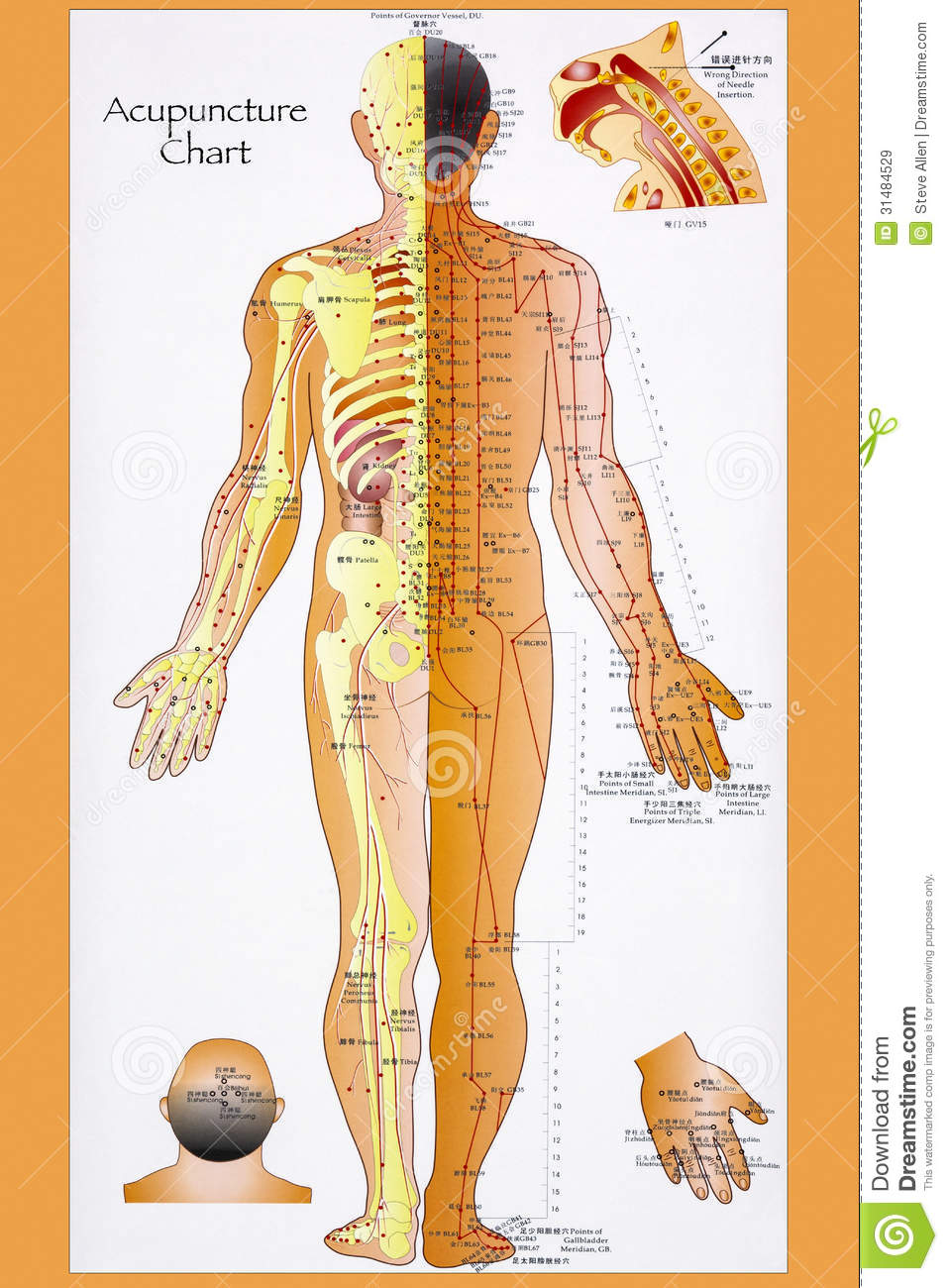 Traditional Chinese Acupuncture Chart Editorial Stock Image