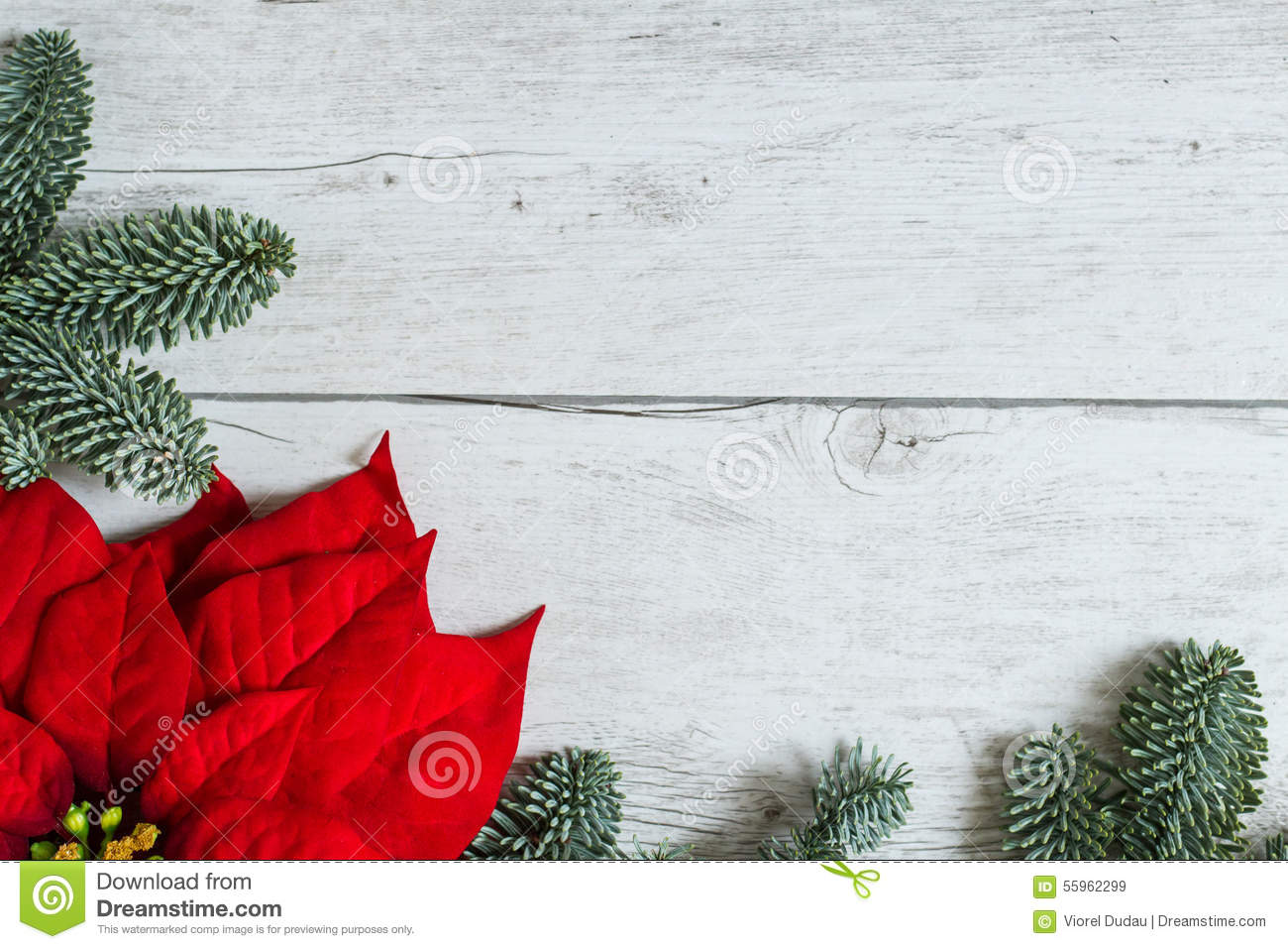 Traditional christmas background with poinsettia flower