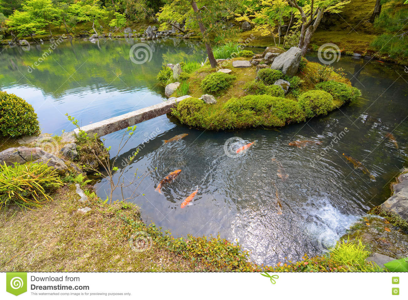 Traditional japanese pond garden with colorful orange carp for Japanese koi pond garden