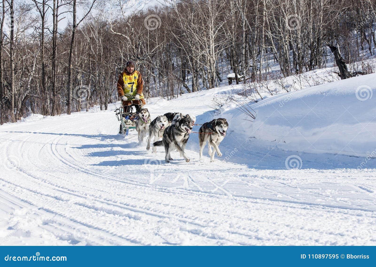 Traditional Kamchatka Dog Sledge Race Elizovsky Sprint