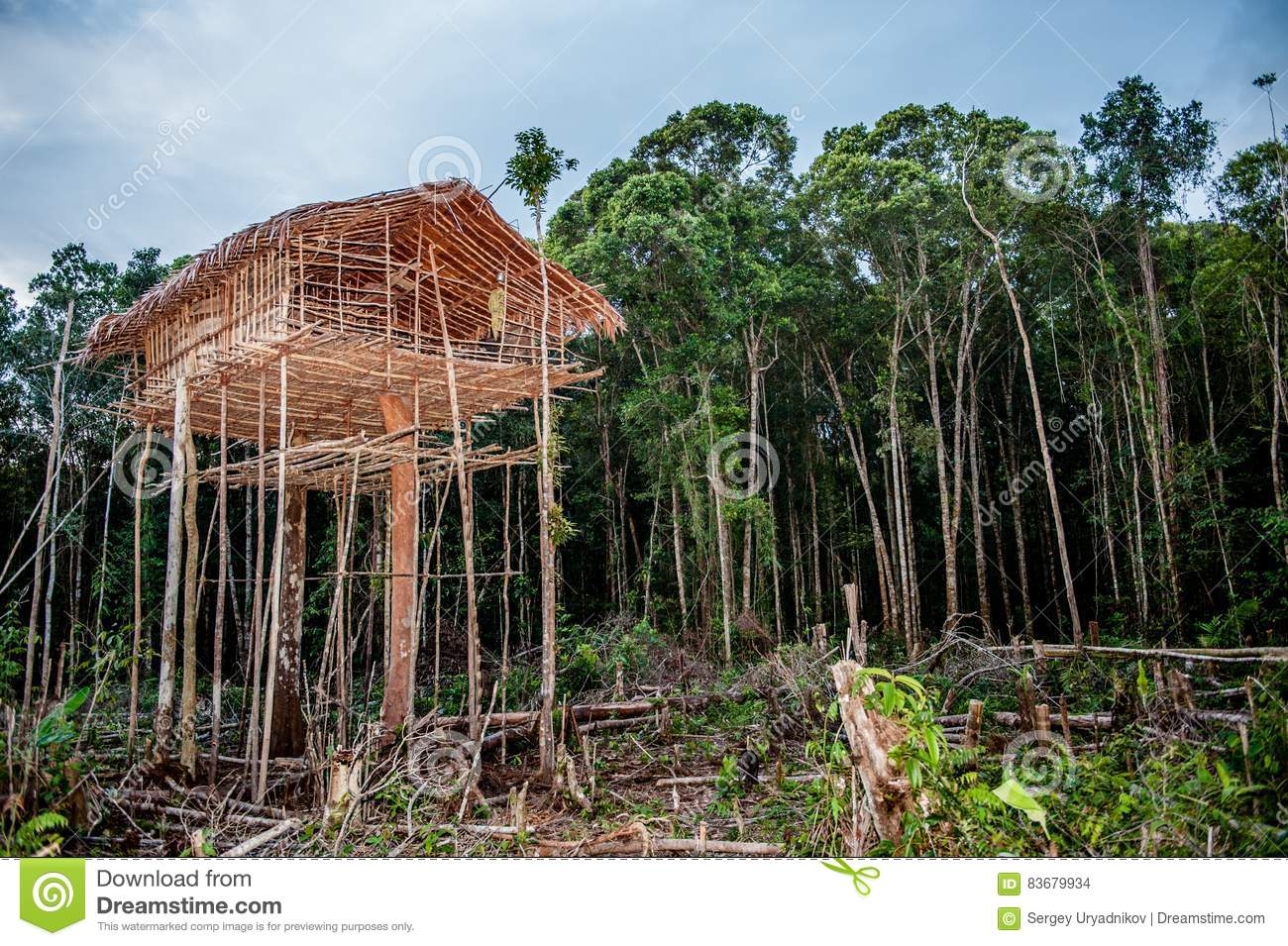 Picture of: Traditional Korowai House Stock Photo Image Of Indonesia 83679934