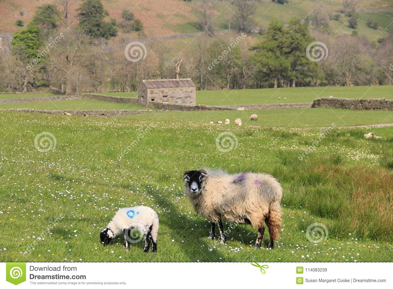 Stone Barn With Sheep