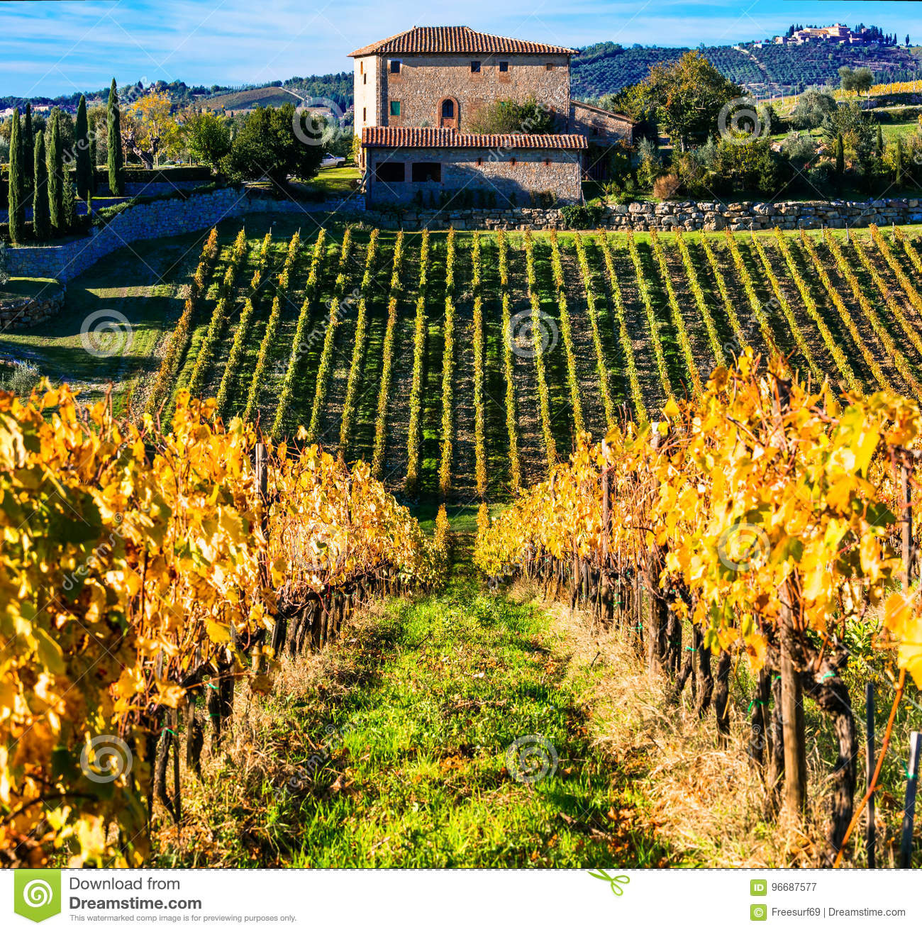traditional tuscany - scenery with autumn vineyards. italy stock