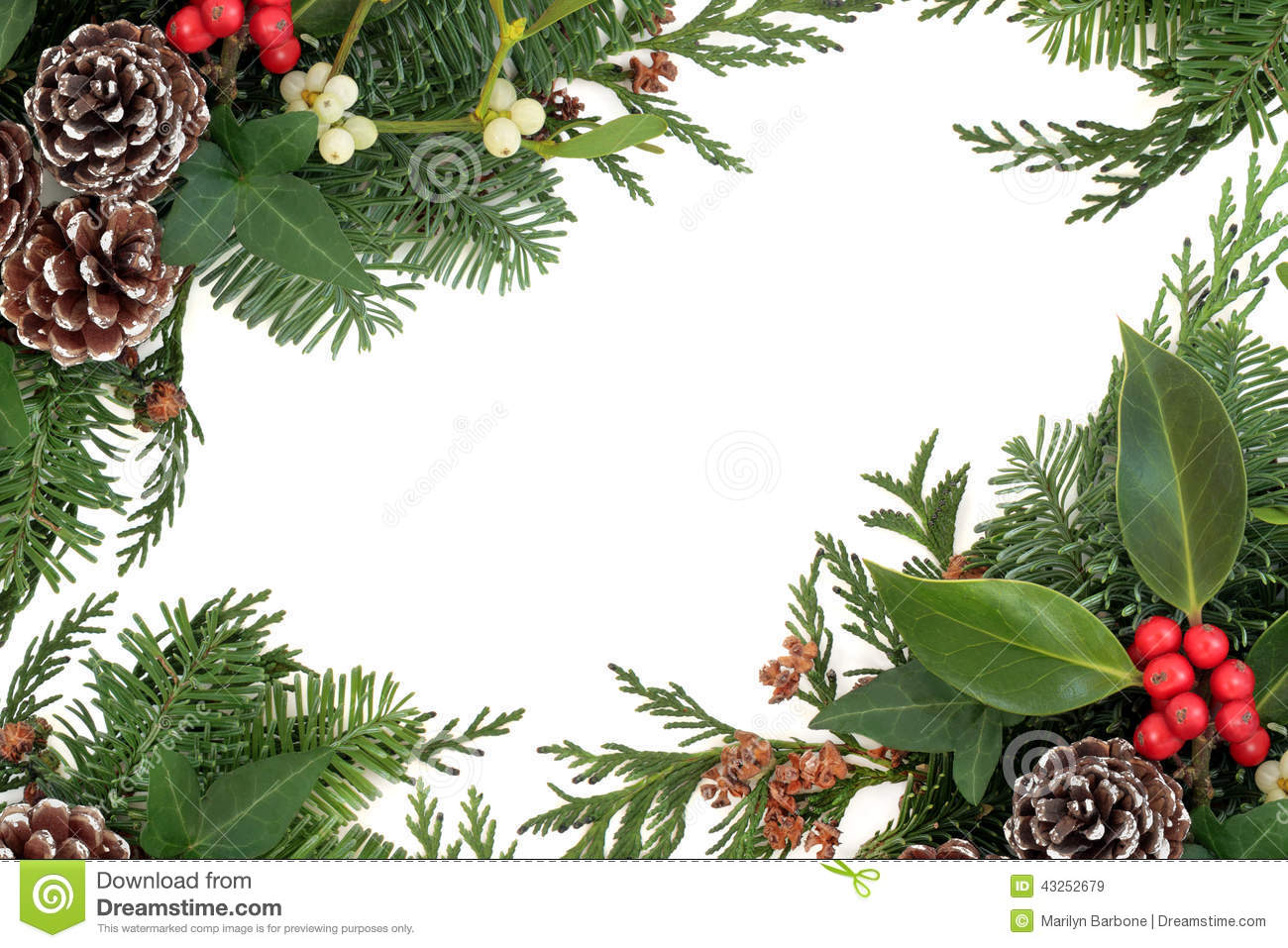 Why is holly a traditional christmas decoration - Royalty Free Stock Photo
