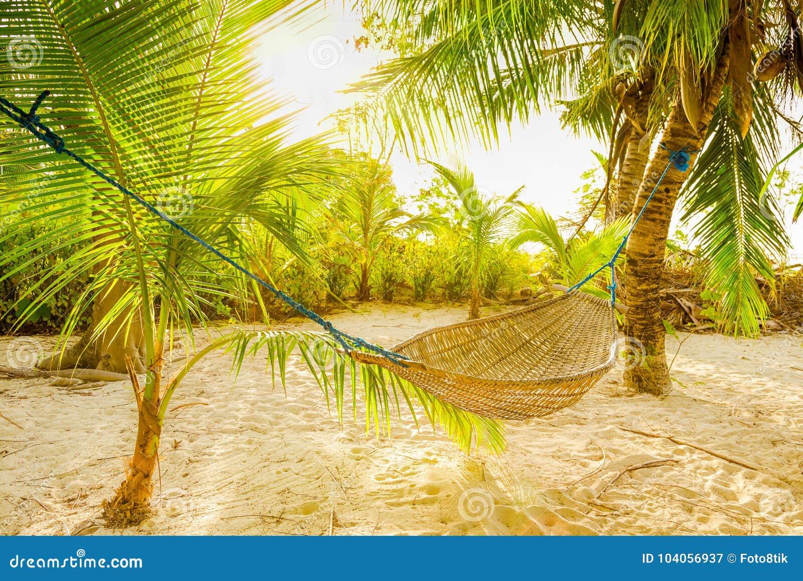 Traditionele gevlechte hangmat tussen palmen in de zon op een tropisch strand