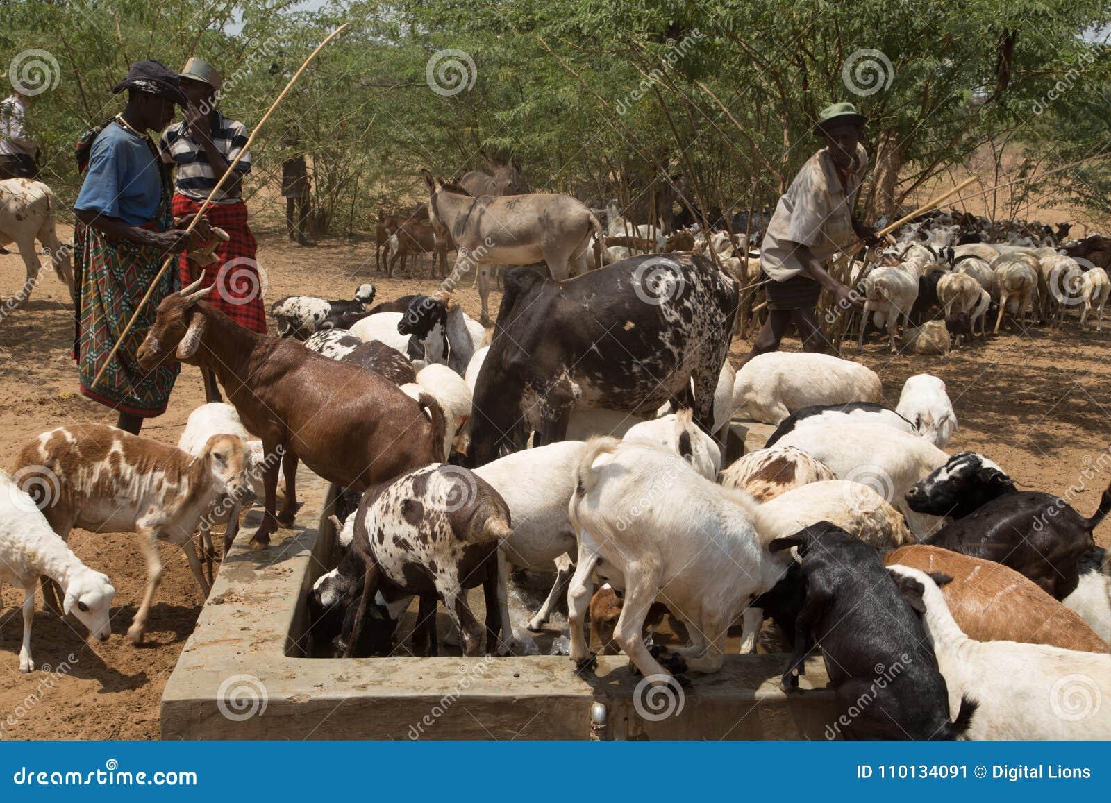 Traditionella afrikanska nomader