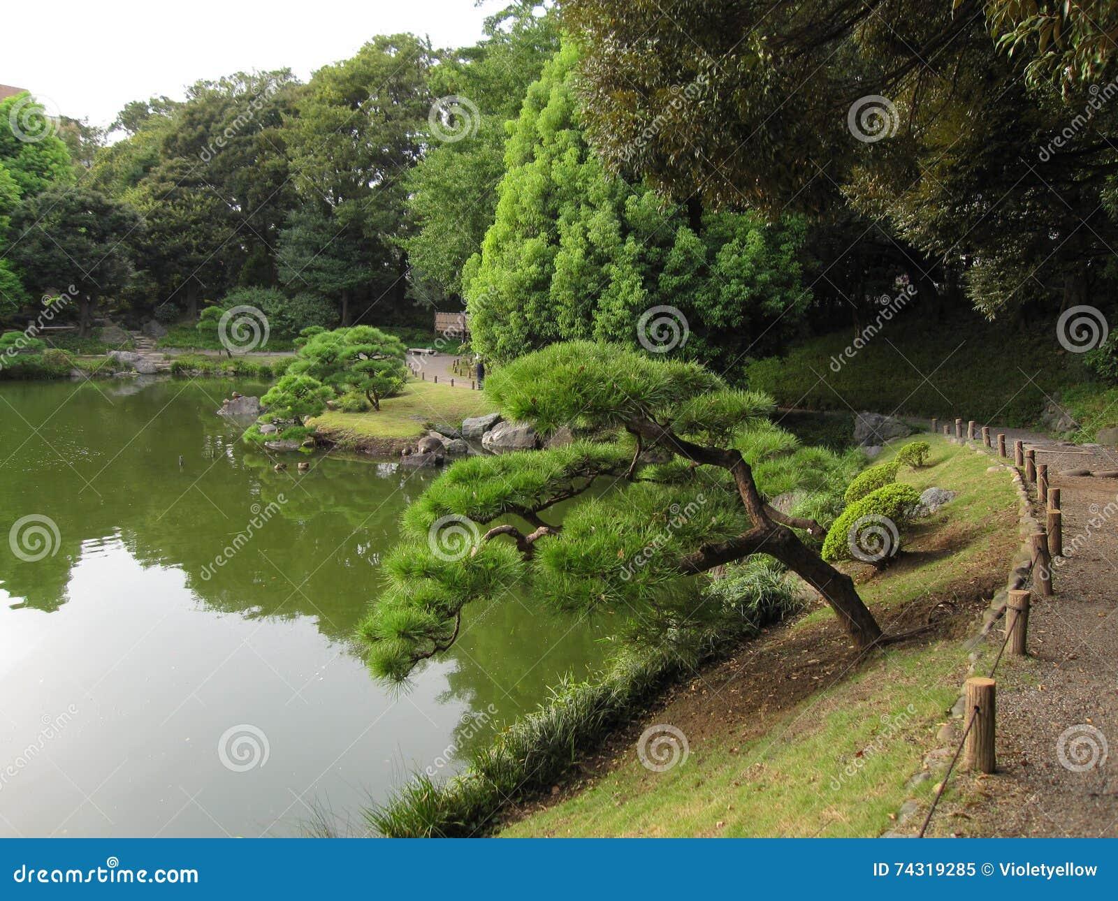 Tradycyjny Japoński przespacerowanie ogród z stawem
