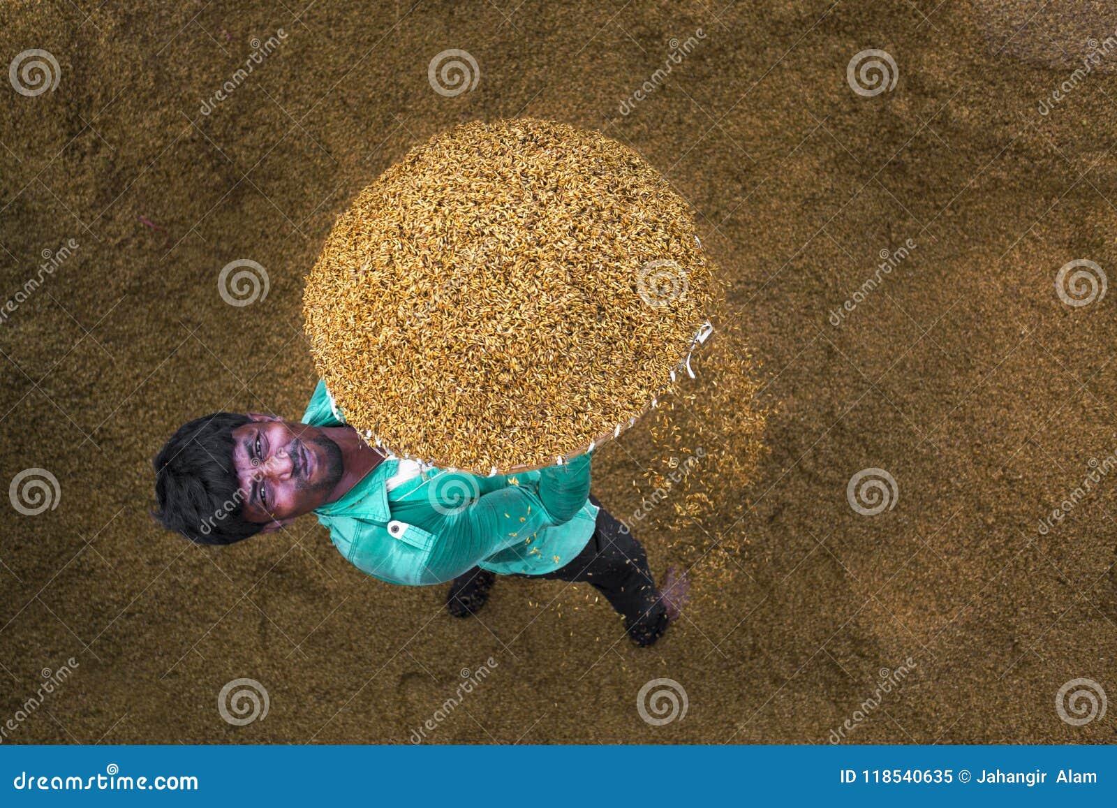Tradycyjny Ryżowego młynu pracownik obraca irlandczyka dla suszyć