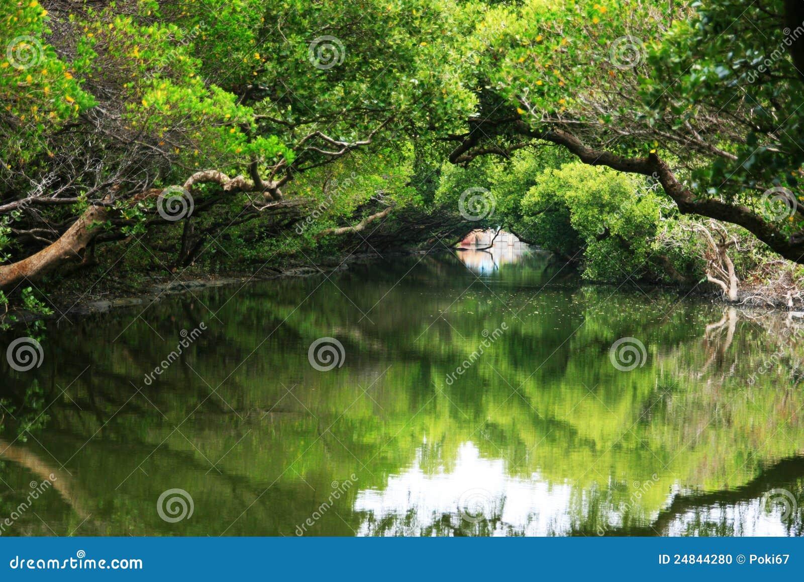 Traforo verde della Taiwan su acqua