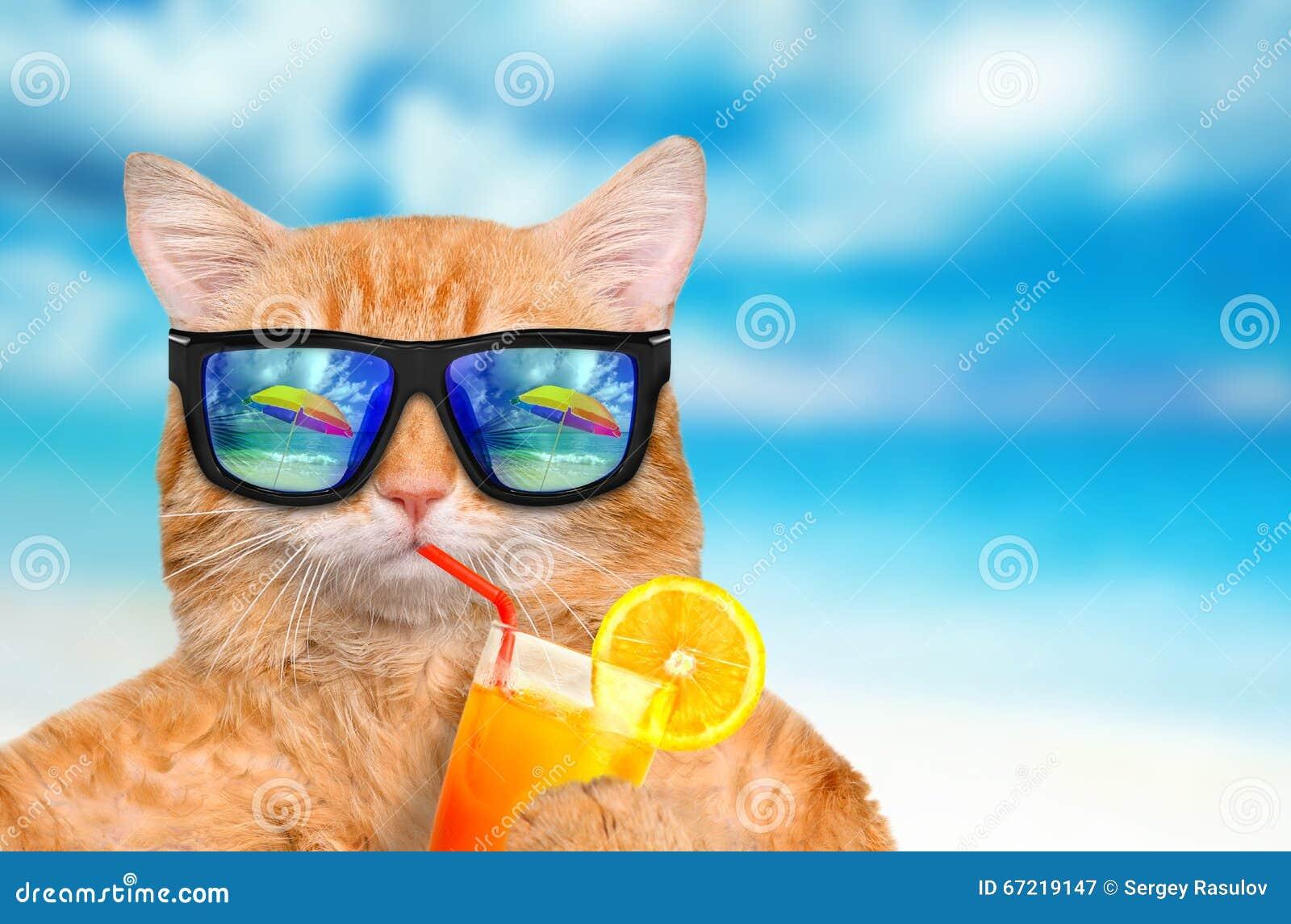 tragende entspannende sonnenbrille der katze stockfoto bild 67219147. Black Bedroom Furniture Sets. Home Design Ideas