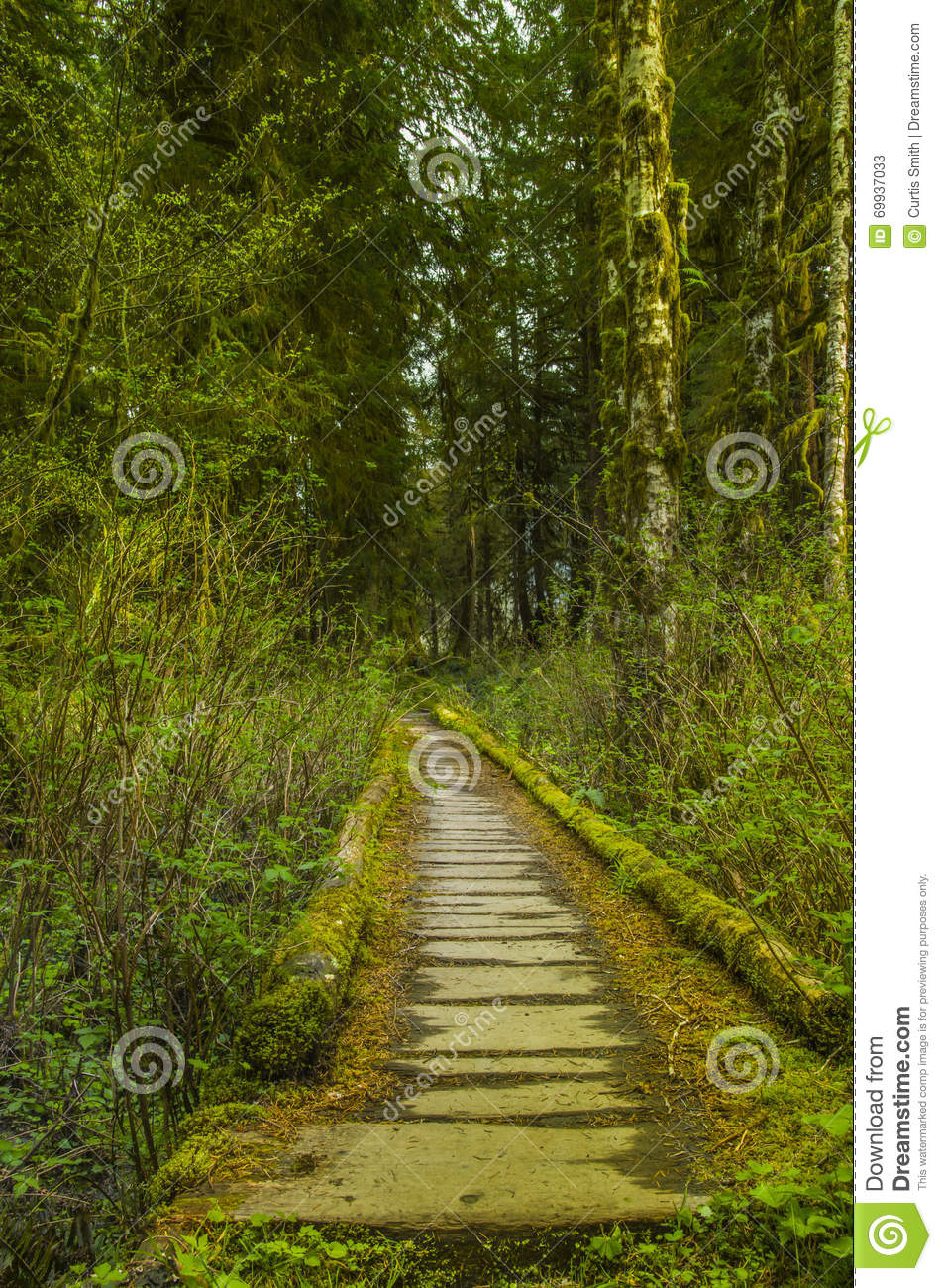 Trail bridge in the Hoh Rain Forest Olympic National Park Washington state