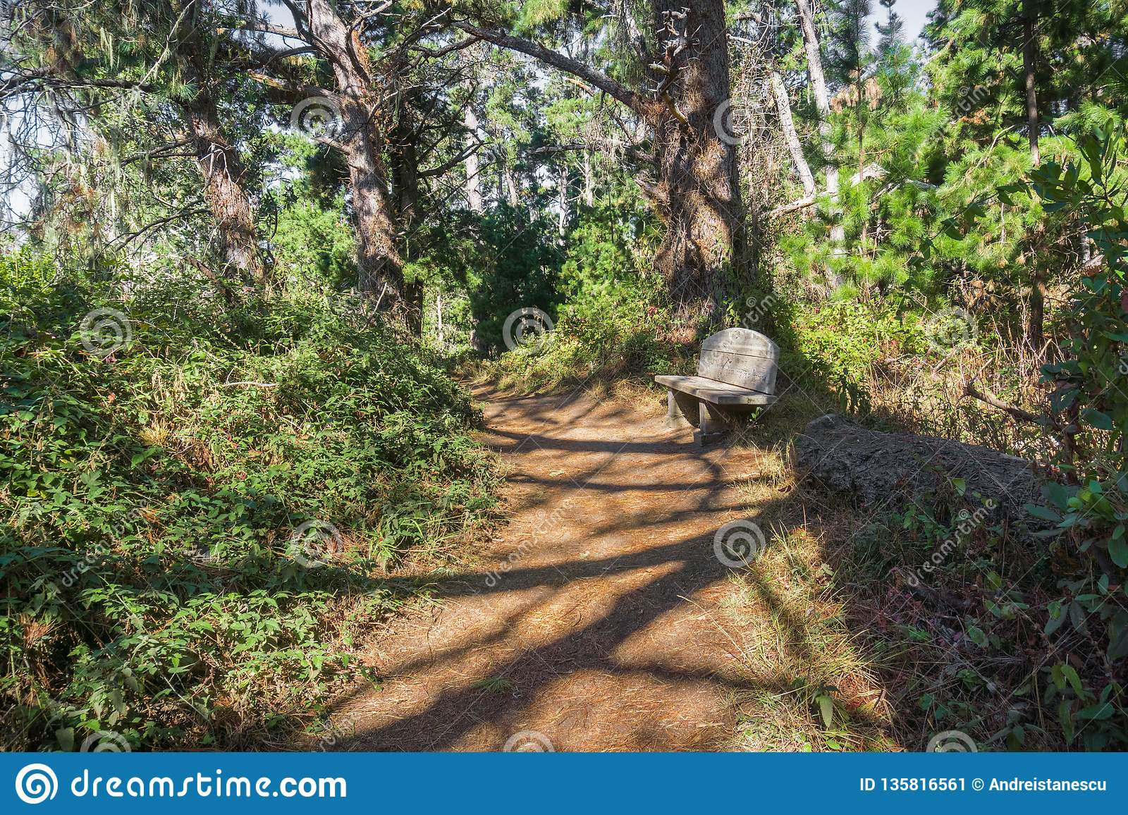 Trail through the forest of Point Lobos State Natural Reserve, Carmel-by-the-Sea, Monterey Peninsula, California