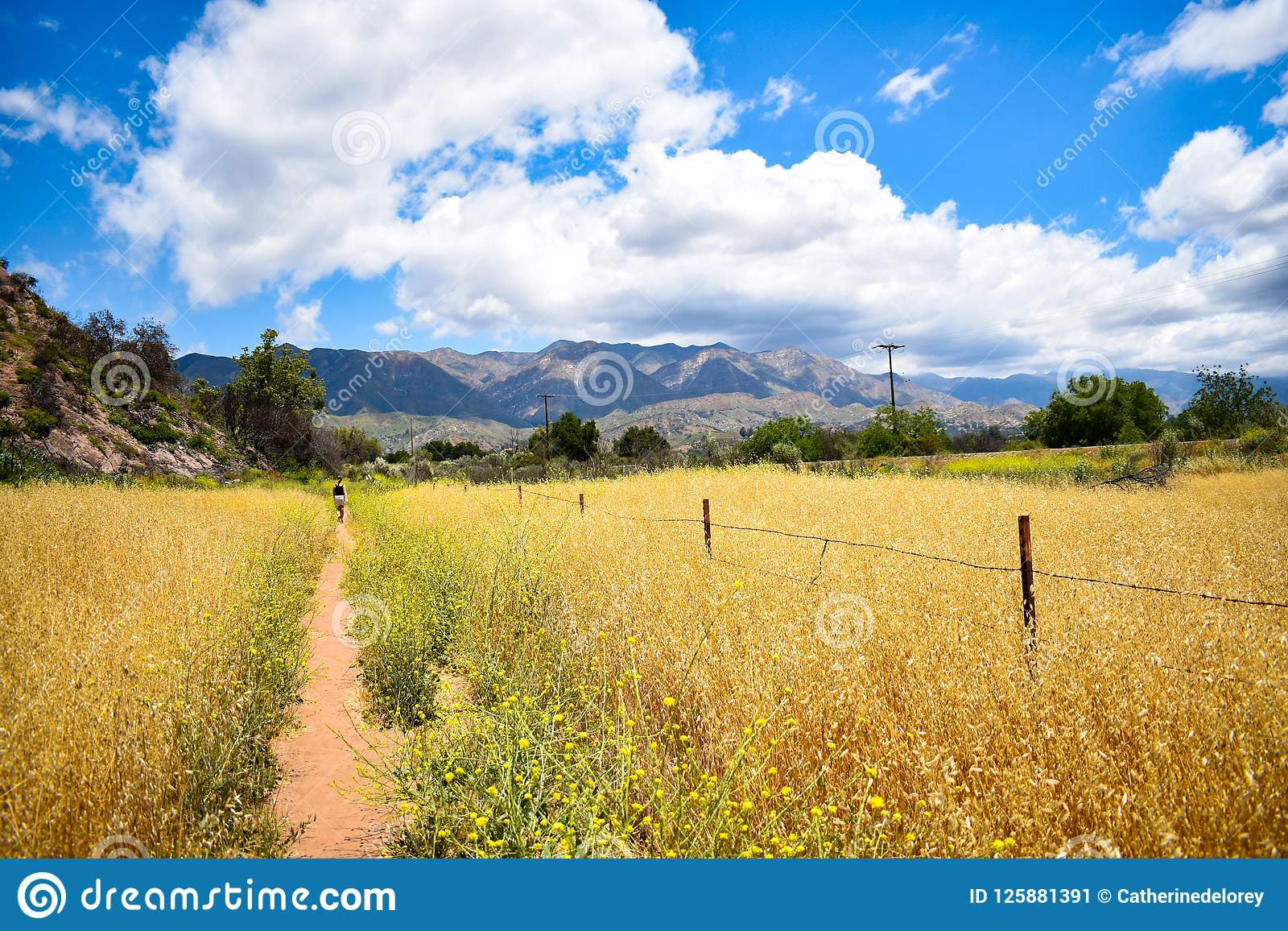 Trail through a golden field on a sunny summer day