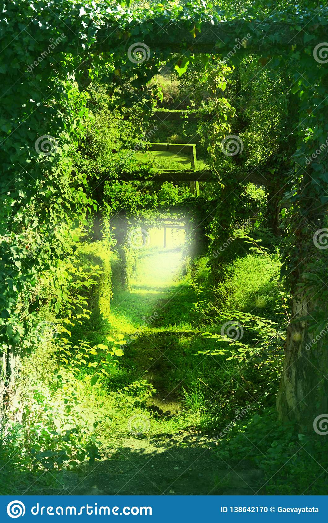 Trail in the green tunnels of the branches of trees, grass, climbing vines. Image