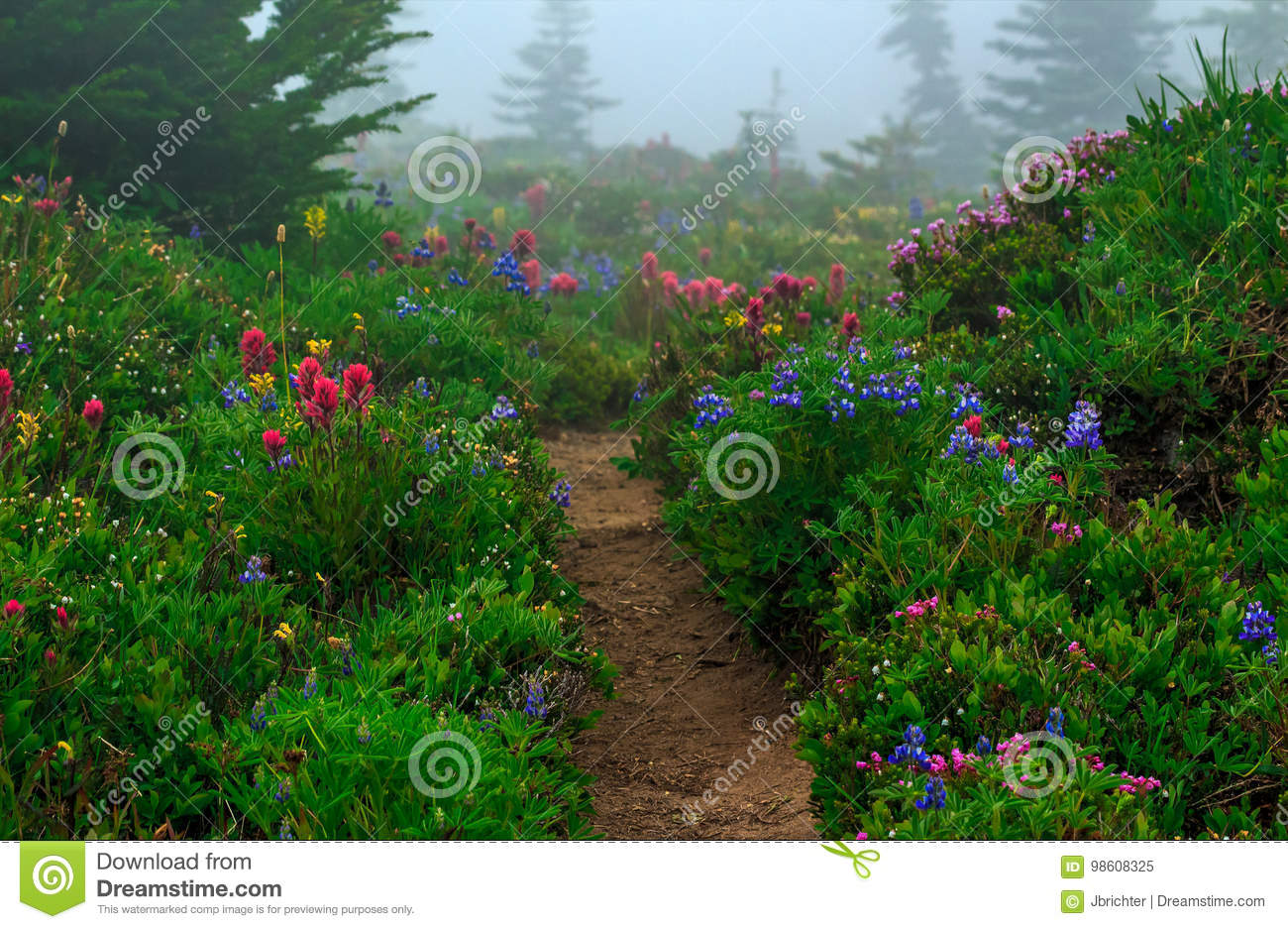 Trail In Spray Park Washington State Stock Image Image Of