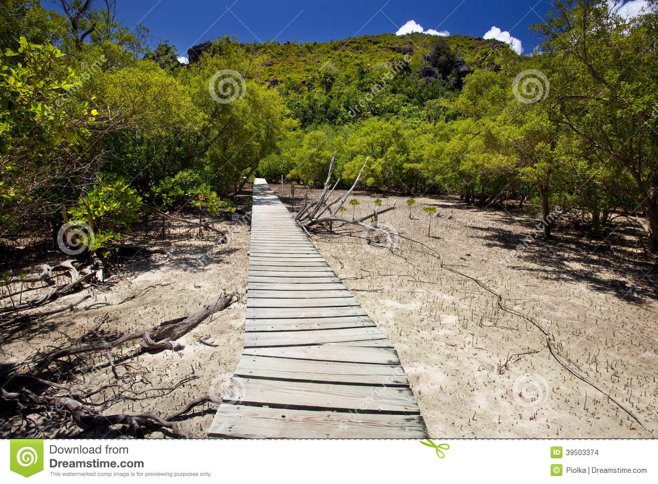 Trailway through the mangrove forest