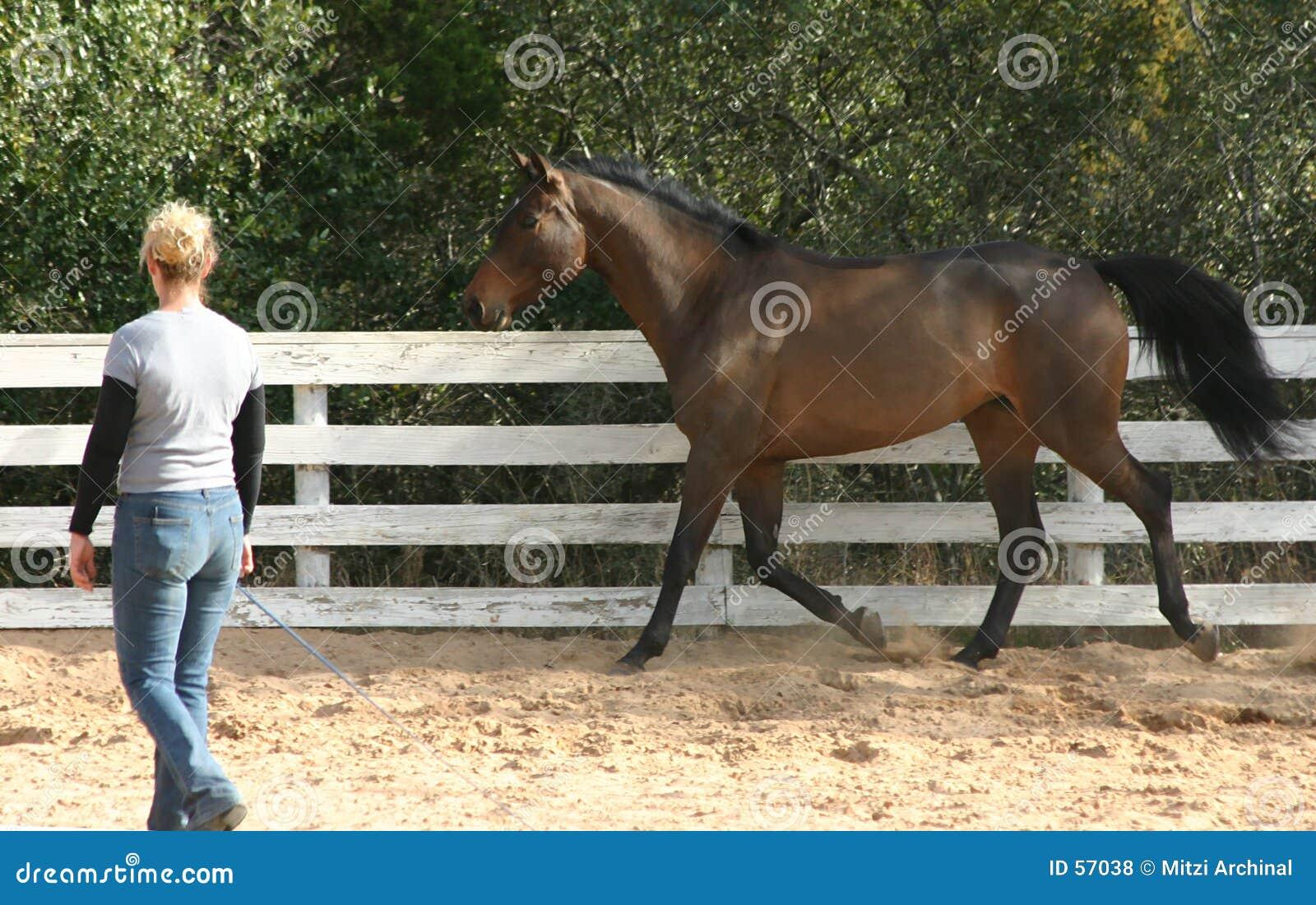 Trainer 2 van het paard