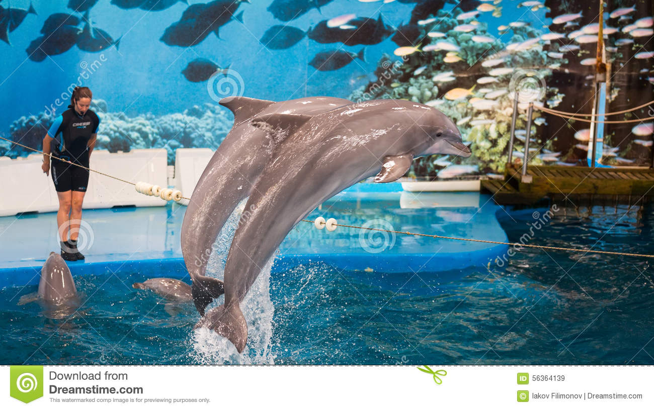 Trainer Nd Dolphins Performing In Dolphinarium Editorial Stock Image