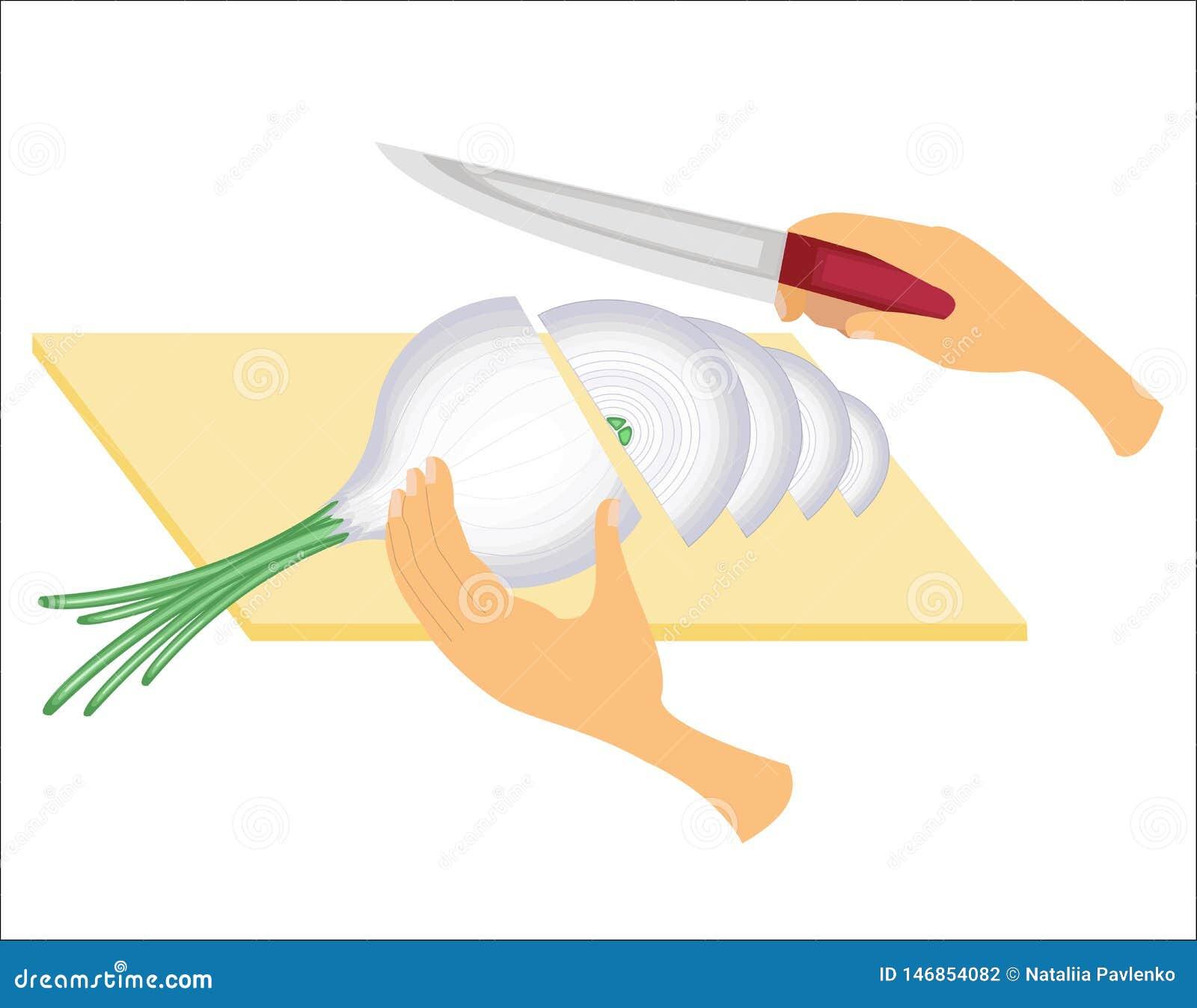 Traitement d oignon Les légumes ont coupé avec un couteau sur le conseil Préparation de nourriture savoureuse, saine, saine Illus