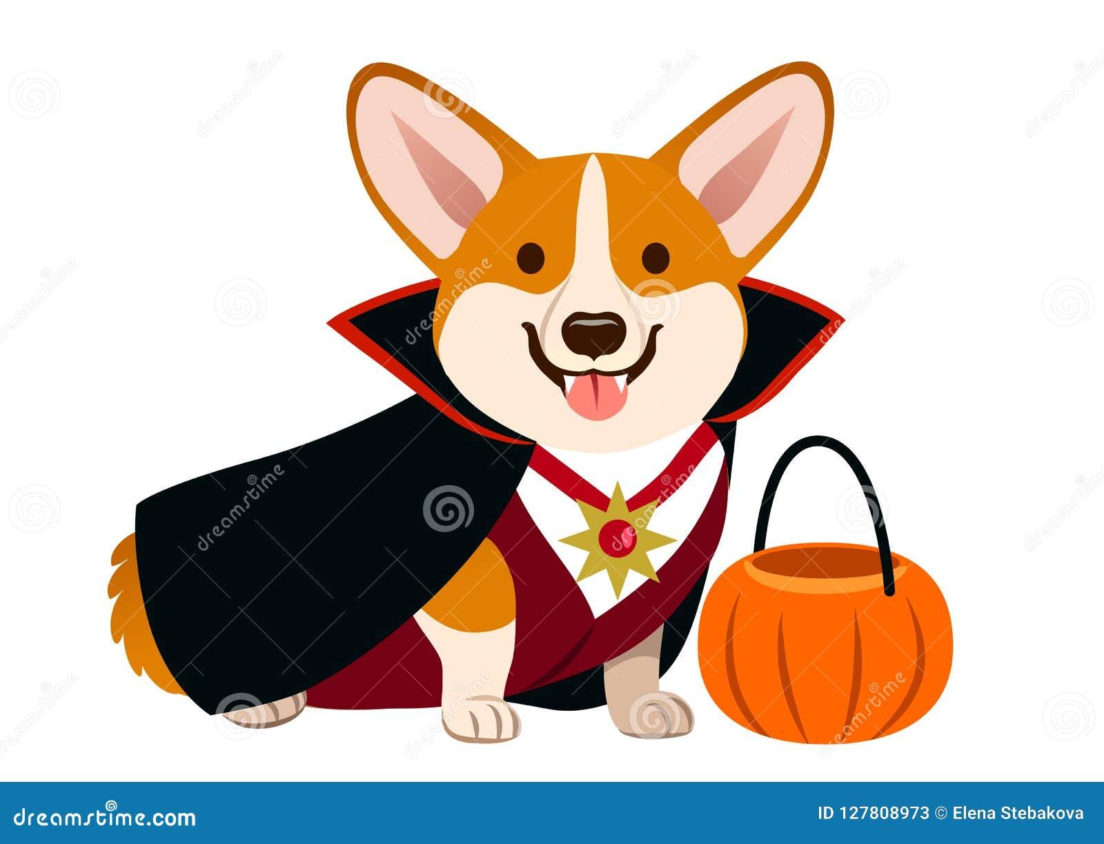 Traje de Halloween del vampiro del perro del Corgi que lleva con el cabo negro, fan