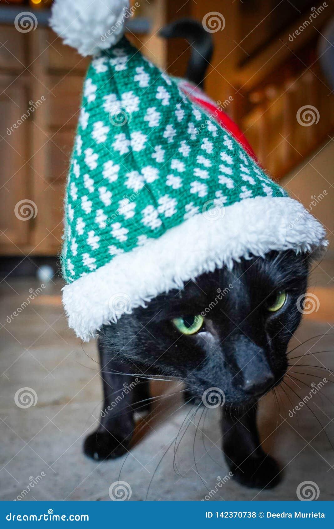 Traje vestindo do Natal do gato preto