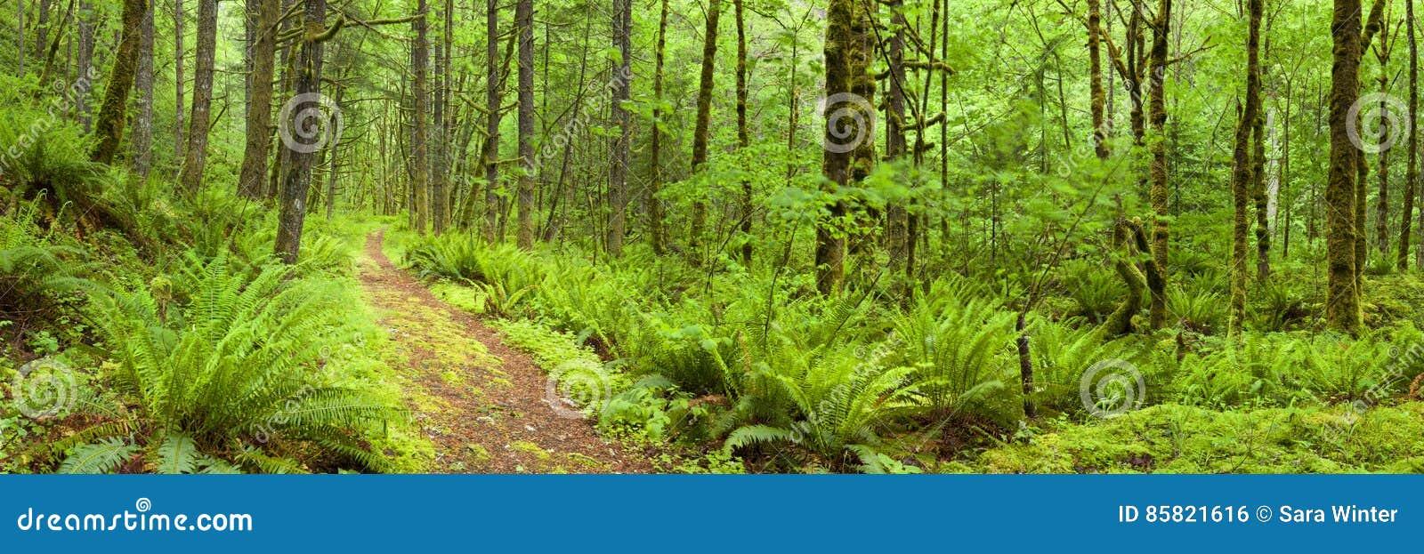 Trajeto através da floresta úmida luxúria, desfiladeiro do Rio Columbia, EUA