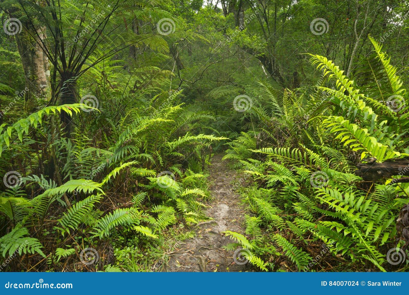 Trajeto através da floresta úmida na rota NP do jardim, África do Sul