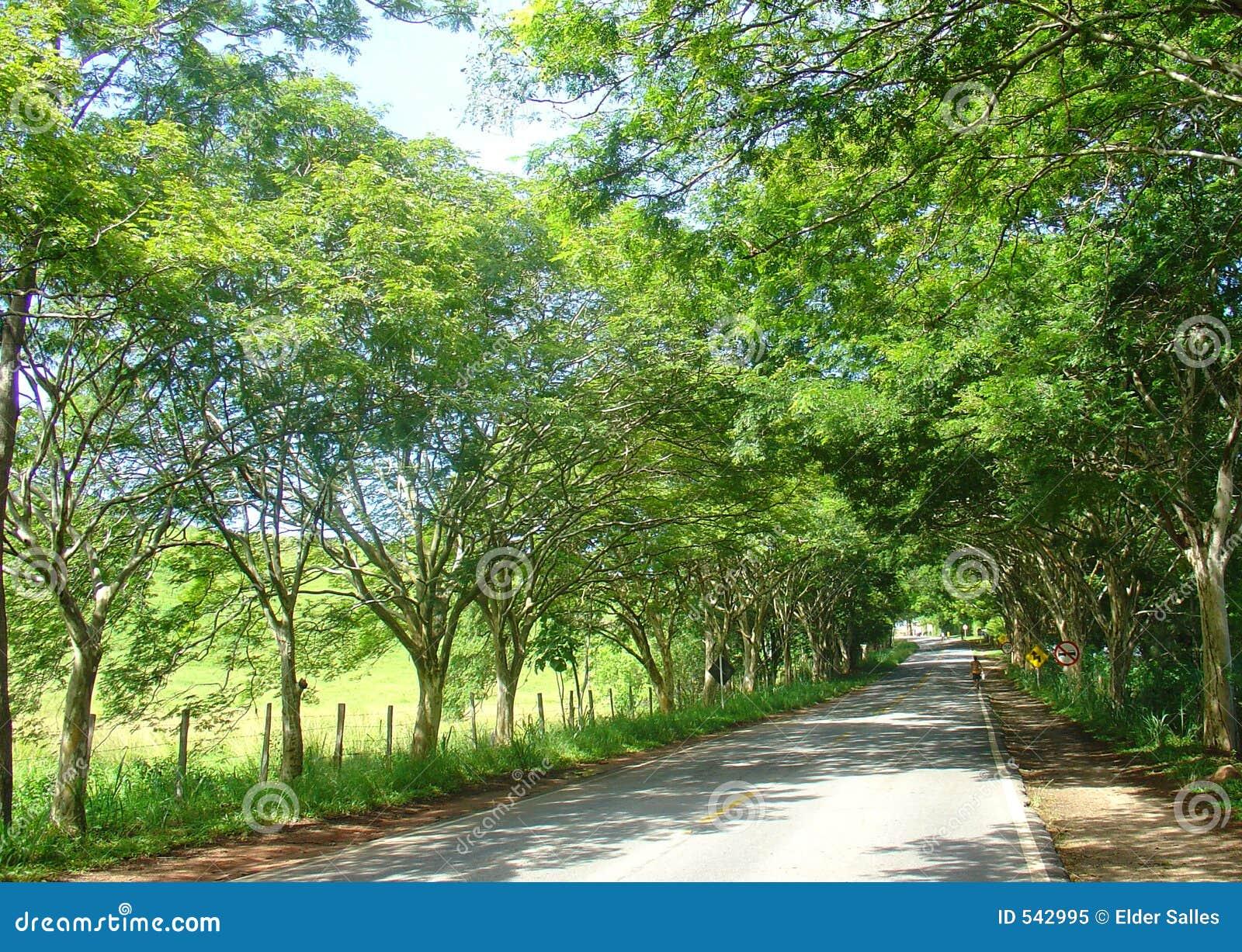 Trajeto da estrada das árvores