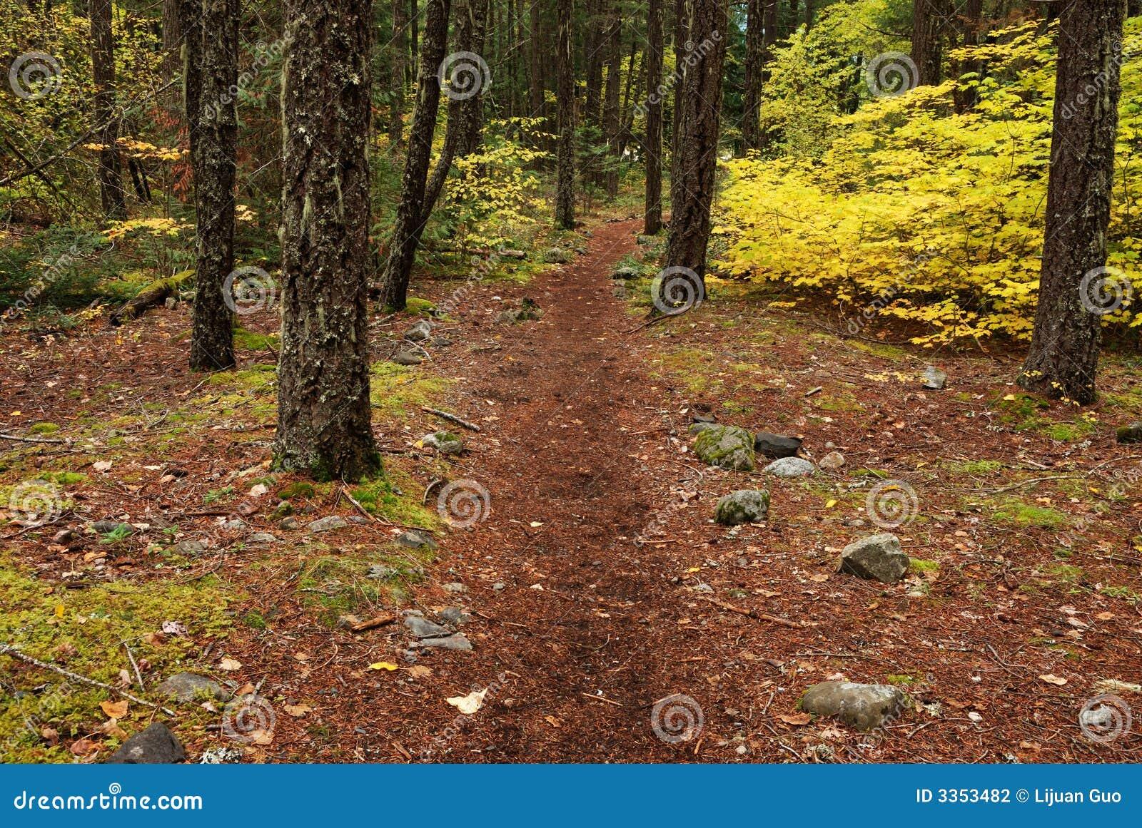 Trajeto de floresta no outono