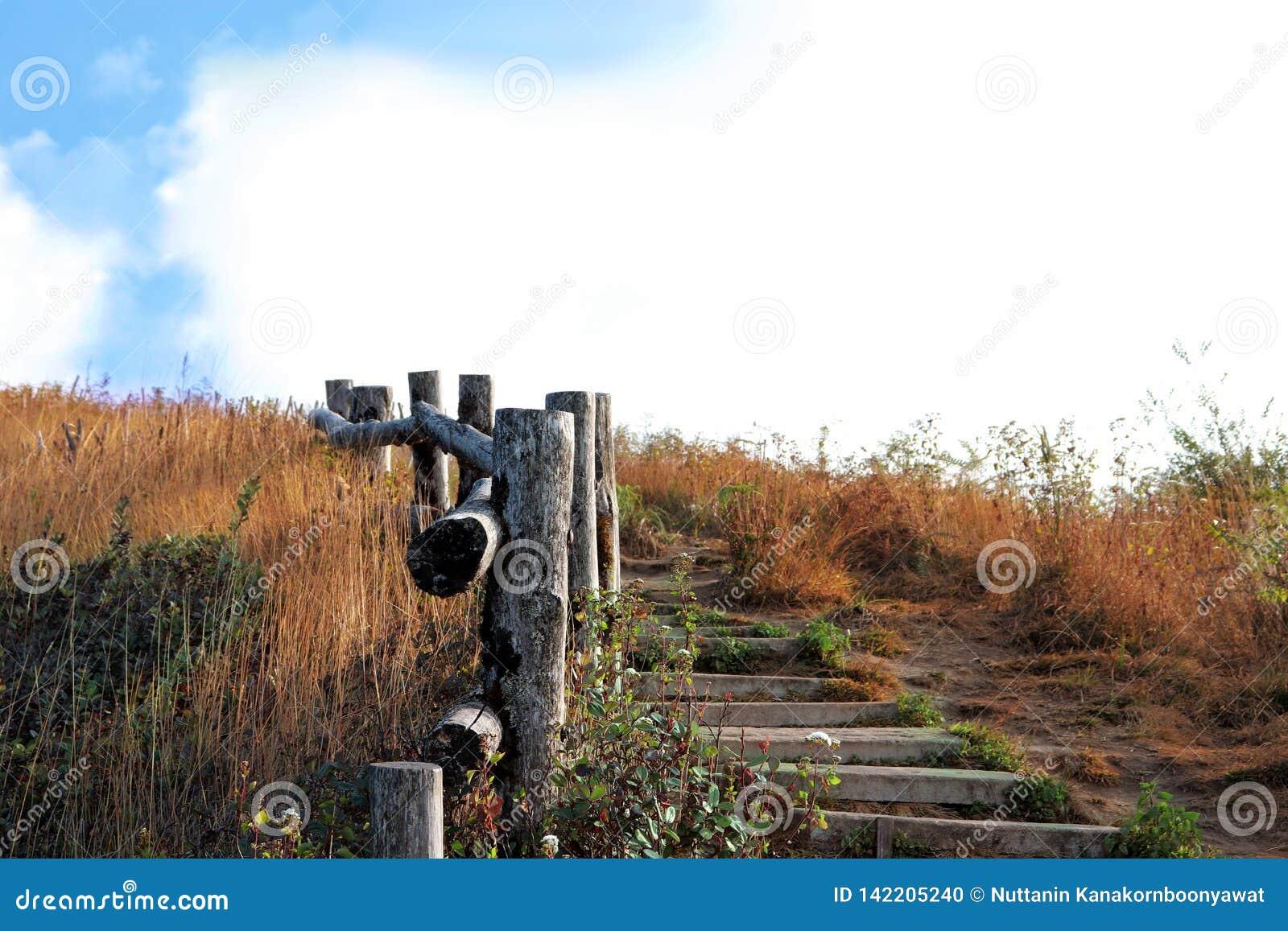 Trajeto de madeira, maneira, trilha das pranchas no parque do campo, fundo da imagem da perspectiva Vista da parte superior do pe