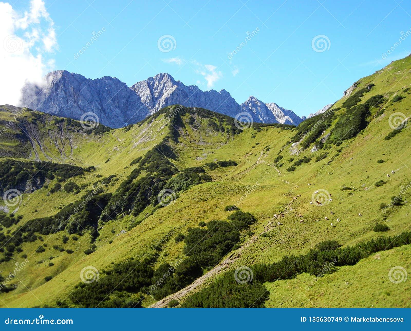 Trajeto em montanhas da grama, em vacas e em rochas pointy