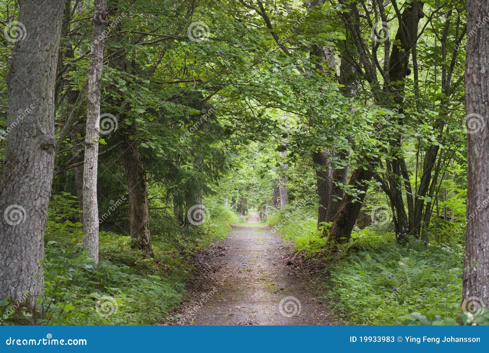 Trajeto na floresta