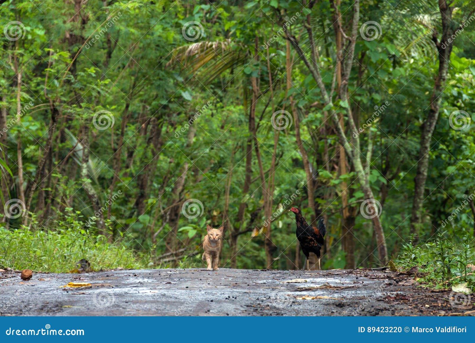 Trajeto na selva