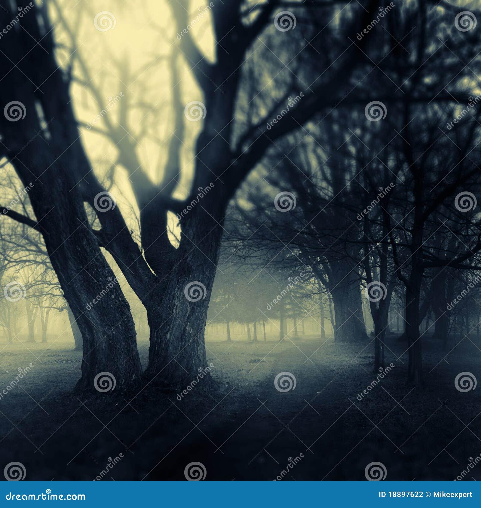 Trajeto nevoento do parque